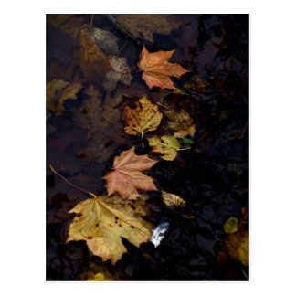 Autumn Leaves and a Feather Postcard