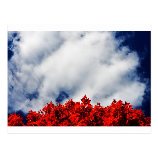 """""""autumn leaves and sky"""" by Coressel Productions Postcard"""