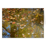 Autumn Leaves and Stream Reflection at Greenbelt Card