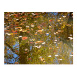 Autumn Leaves and Stream Reflection at Greenbelt Postcard