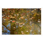 Autumn Leaves and Stream Reflection at Greenbelt Poster