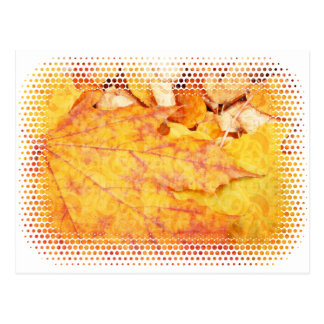 Autumn leaves background postcard