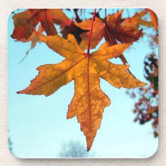 autumn leaves beverage coaster