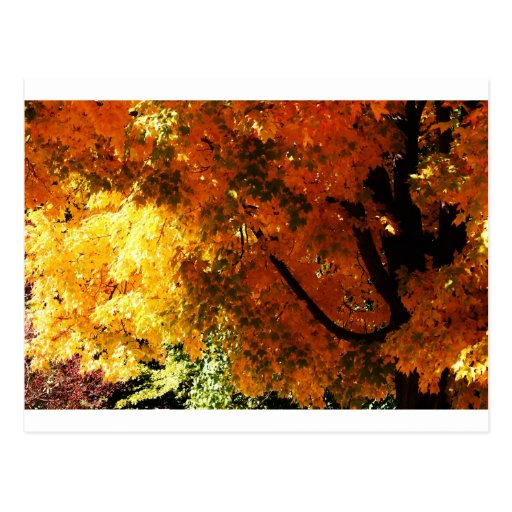 """""""autumn leaves"""" by Coressel Productions Postcard"""