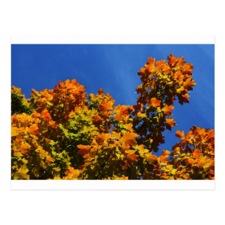 """autumn leaves"" by Coressel Productions Postcard"