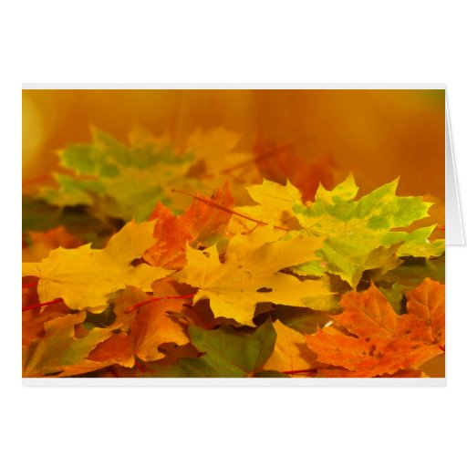 Autumn Leaves Cards