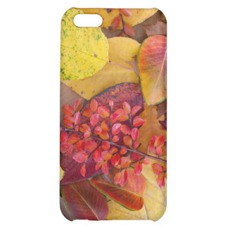 Autumn Leaves Case For iPhone 5C