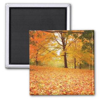 Autumn Leaves Central Park New York City Fridge Magnets