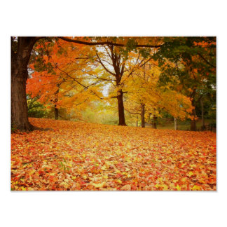 Autumn Leaves, Central Park, NYC, Small Poster