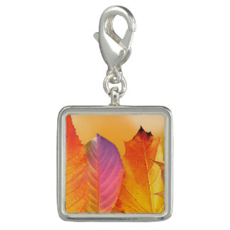 Autumn Leaves Colorful Modern Fine Art Photography Charm