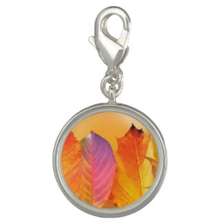 Autumn Leaves Colorful Modern Fine Art Photography Charms