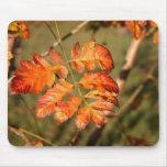 Autumn Leaves Colors Mousepad