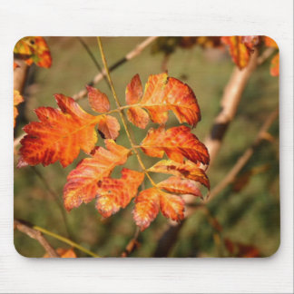 Autumn Leaves Colors Mousepad