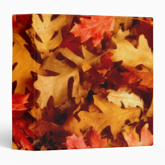 Autumn Leaves - Fall Color Binder