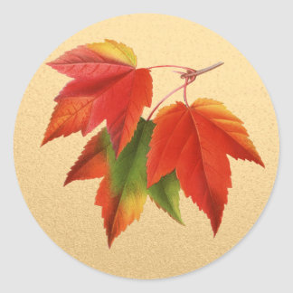 Autumn Leaves Fall Colors Maple Leaf on Gold Classic Round Sticker