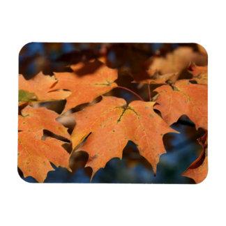Autumn Leaves Flexible Magnet