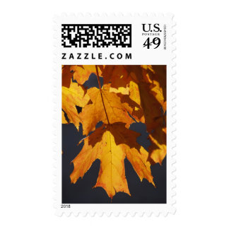 Autumn leaves glow orange and red in light postage