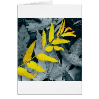 Autumn Leaves:  Golden Locust Card
