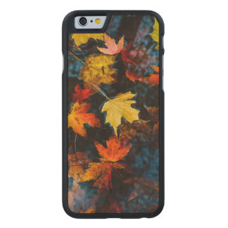 Autumn Leaves in a Pool of Dark Water Carved Maple iPhone 6 Case