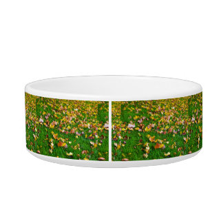 Autumn Leaves in the Green Grass Bowl