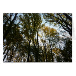 Autumn Leaves in the Morning I Maryland Nature Card