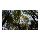 Autumn Leaves in the Morning I Maryland Nature Poster