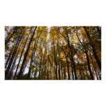 Autumn Leaves in the Morning II Maryland Nature Poster