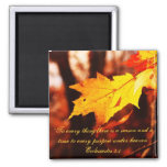 Autumn Leaves in the Poconos Magnet