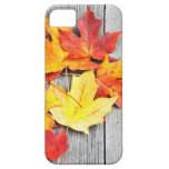 Autumn Leaves iPhone 5 Cover