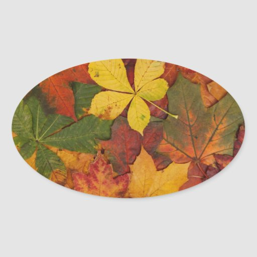 Autumn Leaves (Leaf) - Brown Yellow Red Green Oval Stickers
