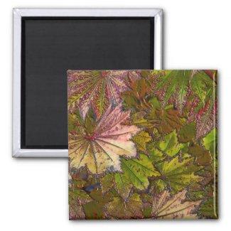 Autumn Leaves - Magnet #1 magnet