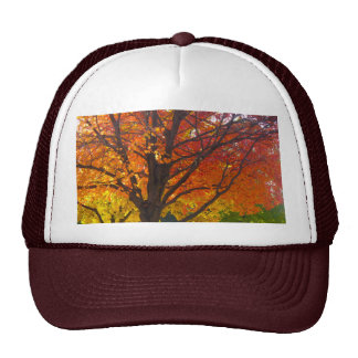 Autumn Leaves of Yellow and Orange Trucker Hat