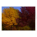 Autumn Leaves of Yellow and Purple Card