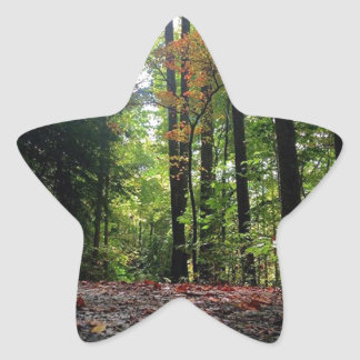 Autumn Leaves on a Dirt Road Star Sticker