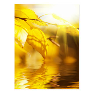Autumn leaves on a sunny day postcard