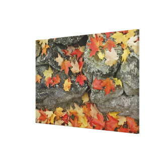 Autumn leaves on stone wall, Minute Man Canvas Print