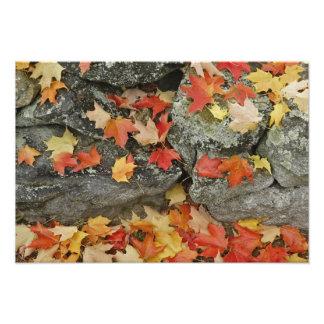 Autumn leaves on stone wall, Minute Man Art Photo