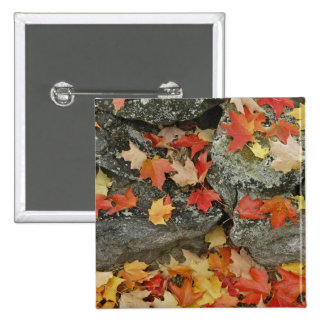 Autumn leaves on stone wall, Minute Man Pinback Button