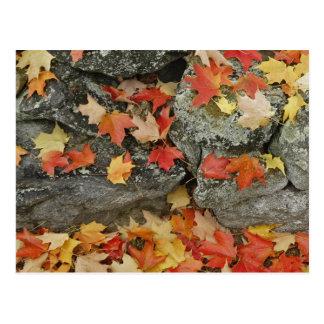 Autumn leaves on stone wall, Minute Man Postcard