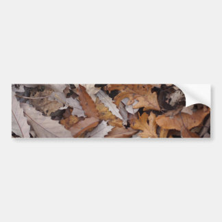 Autumn Leaves On The Ground Car Bumper Sticker