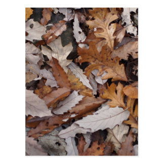 Autumn Leaves On The Ground Postcard