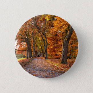 Autumn leaves on the road pinback button