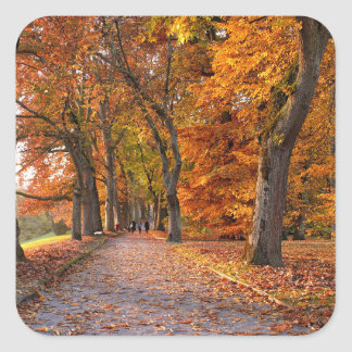 Autumn leaves on the road square sticker