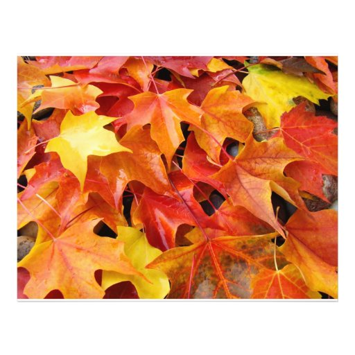 Autumn Leaves Orange Yellow Red Flyer Paper
