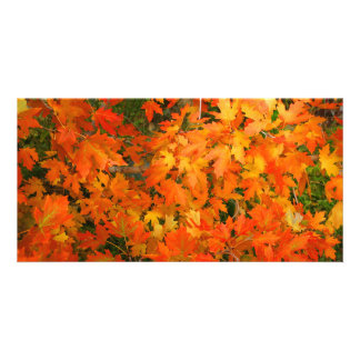 Autumn Leaves Picture Card