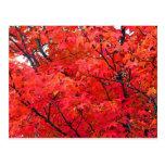 Autumn Leaves Post Card