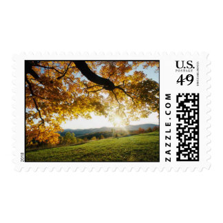 Autumn Leaves Stamps