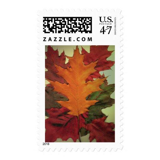 Autumn Leaves Postage Stamp