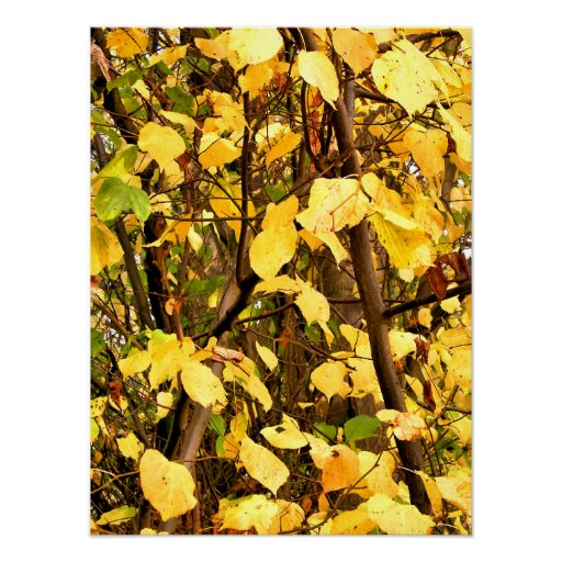 AUTUMN LEAVES POSTERS