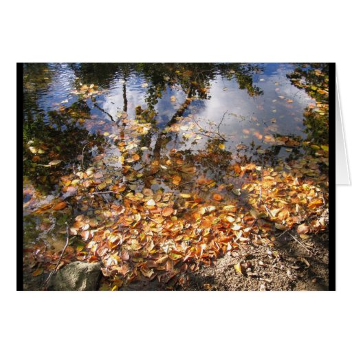 Autumn Leaves Reflected Notecard